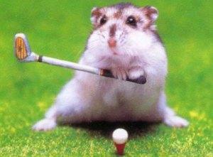 hamster_golf